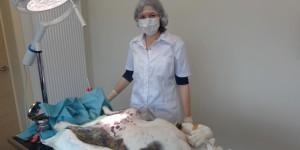 Dierenartspraktijk : onderzoek - operatie
