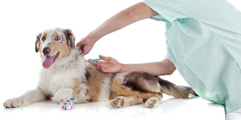 Inenting van honden en puppy's